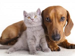 ¿Cuándo contratar un abogado de Derecho animal?