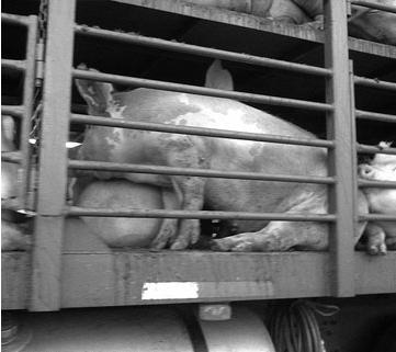 Animales con derecho