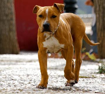 Derecho animal en Barcelona